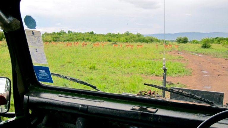 Safaribil i Masai Mara.