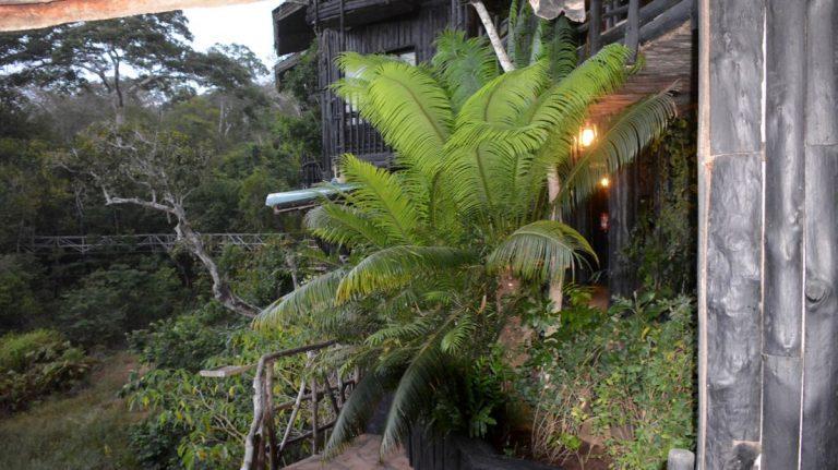 Shimba Hills Lodge.