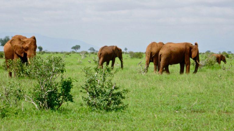 Elefanter.