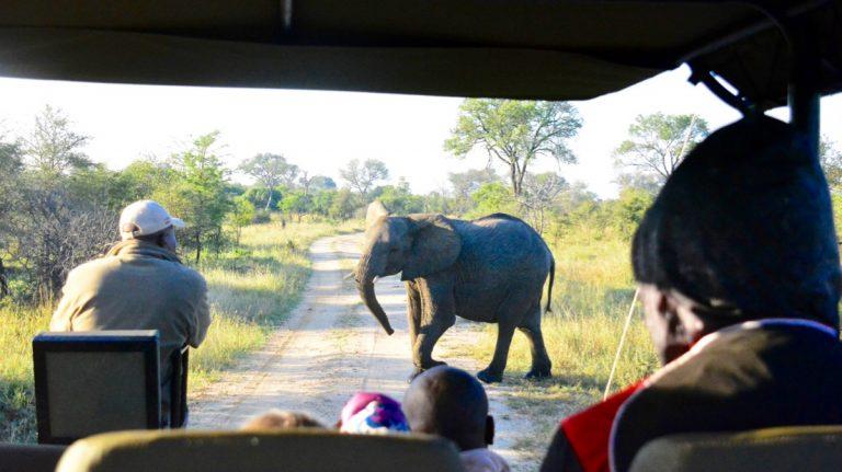 Safaribil i Manyeleti, Sydafrika.