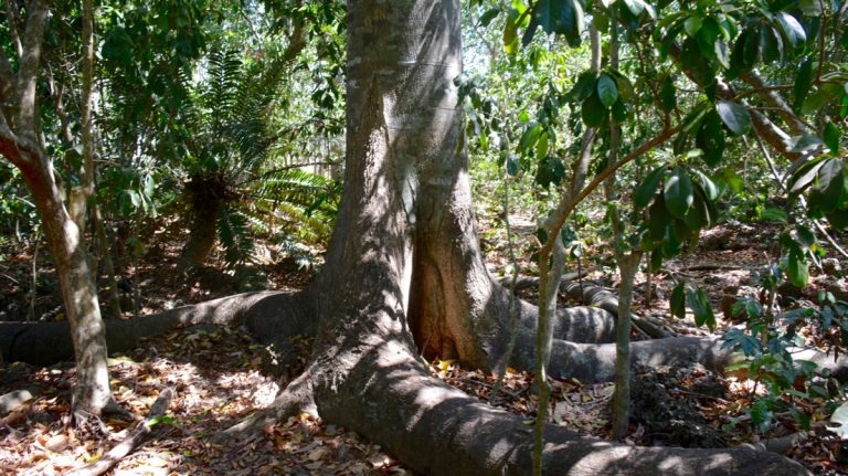 Kaya Kinondo Sacred Forest.