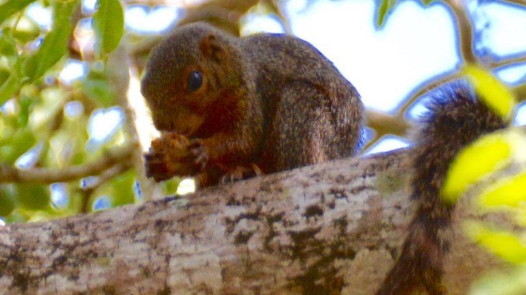 Egern.